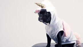 Beat the Unicorn: Atychiphobia