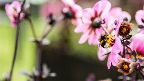Herstel van de populatie wilde bijen: maak de cirkel rond!