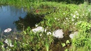 Biodiversiteits- en klimaatadaptieve maatregelen Hoogheemraadschap Delfland