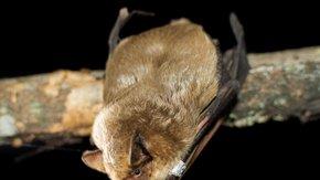 Samenwonen met vleermuizen bij Crailo