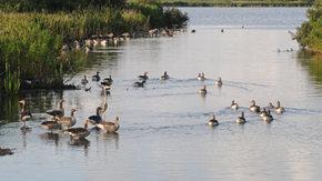 Beheerplannen Natura 2000 Laag Nederland