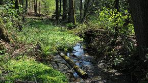 Beheerplannen Natura 2000 Hoog Nederland