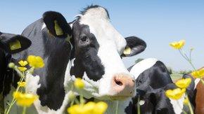 Een duurzame en gezonde bodem biedt kansen voor klimaatadaptatie en landbouw