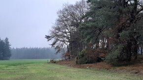 Inrichtingsplan en natuurherstel Landgoed Junne