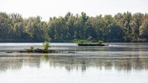Vogeleilanden in Lepelaarplassen nog dit jaar een aantrekkelijke rust- en broedplaats