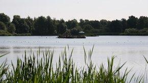 TAUW herstelt 'vogelparadijs' in de Lepelaarplassen