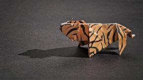 Managementsystemen: papieren tijger of hulphond?