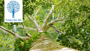 Nieuwe bomen in Limburg en Oeganda dankzij kerstdonatie
