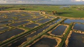 Innovatieve sanering en transformatie Volgermeerpolder: van gifbelt naar natuurgebied