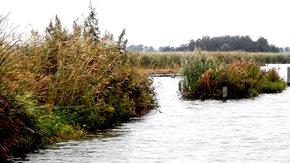 Ontwerp van ondiepe land-waterzones in Wolderwijd
