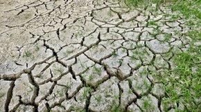 TAUW's standpunt over de nieuwe EU Soil Strategy