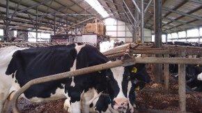 Aanleg monstername-infrastructuur voor mestkeldergassen in melkveestallen
