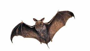 Avontuurlijke vleermuizentocht in Bunnik