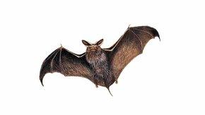 Gaat u mee met onze vleermuizentocht op 3 oktober?