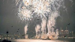 Schrikken vogels van een vuurwerkknal?