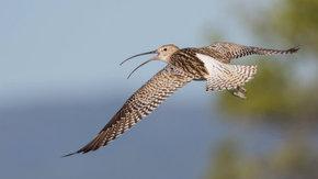 Tauw-team fietst voor duinvogels: steunt u ook dit goede doel?